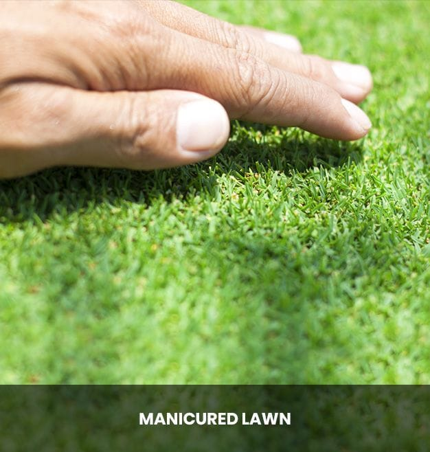 Manicured Lawn Curlewis, Drysdale | Taylor's Lawn Care Geelong & Bellarine Peninsula