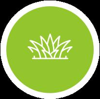 Free Lawn Analysis Curlewis, Drysdale | Taylor's Lawn Care Geelong & Bellarine Peninsula