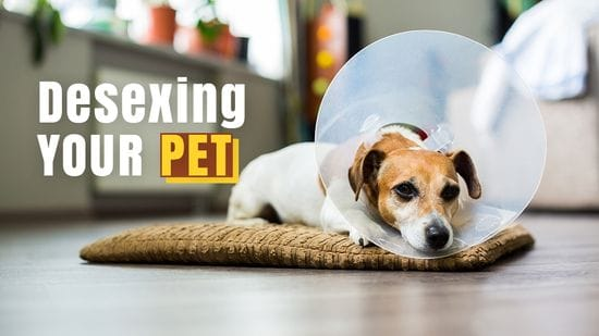 All Your Questions About Desexing Your Pet Answered