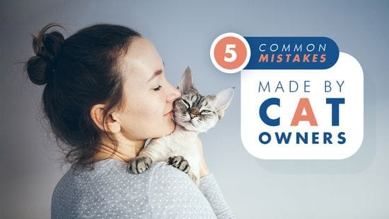 5 Common Mistakes Made By Cat Owners