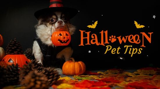 4 Things Pet Owners Should Do Before Halloween