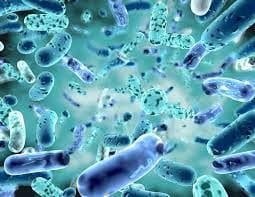 The Use of Probiotics During Cancer Treatments