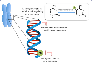 Let's talk about Methylation. It is important for Health and Prevention of Disease