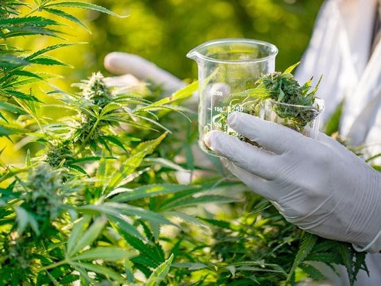 Medicinal Cannabis and Cancer: what is new??