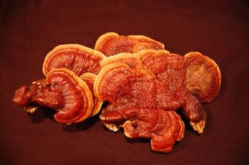 What Is Reishi?