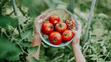 Plant-Based Diets Decrease Prostate Cancer Risk