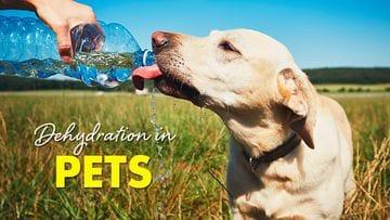 Dehydration in Pets