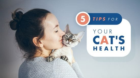 5 Tips for Your Cat's Health