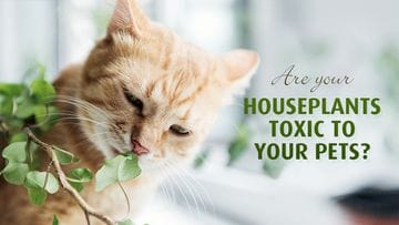 Common Houseplants That Are Toxic to Your Pets
