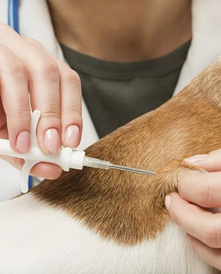 Microchipping | Animal Wellness | North Road Veterinary Centre
