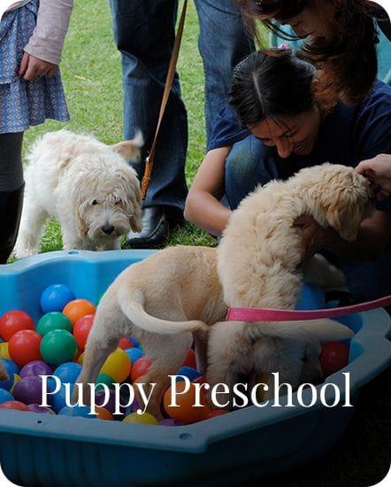 Puppy Preschool in Gardenvale