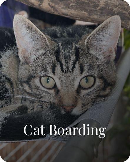 Cat Boarding in Gardenvale