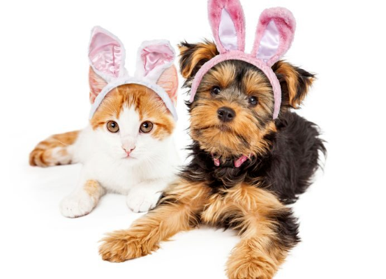Easter Hours at North Road Vet