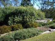 Garden Design, Plan to Plant Horticultural Services