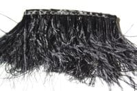 Ostrich feather /m