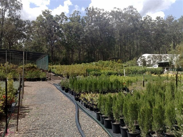 Nursery irrigation systems in Brisbane