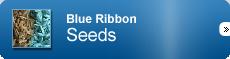 Blue Ribbon-Seeds