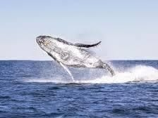 Port Stephens Whale and Dolphin Cruise