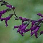Wildwood Gardens Bilpin