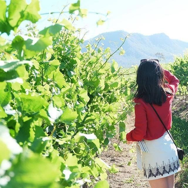 Connect Coaches Hunter valley Wine Tours