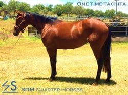 ONE TIME TACHITA  **SOLD**