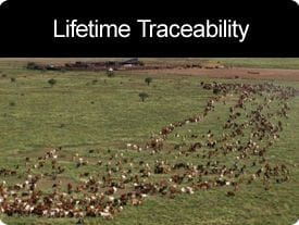 Lifetime Traceability