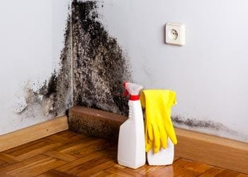 7 Home Maintenance Musts Mould and Mildew