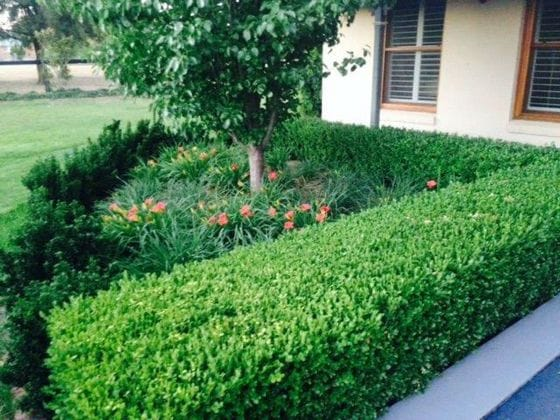 Turf and Gardens