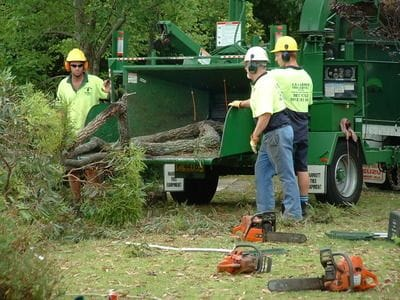 tree pruning, tree lopper, tree trimming, stump grinding