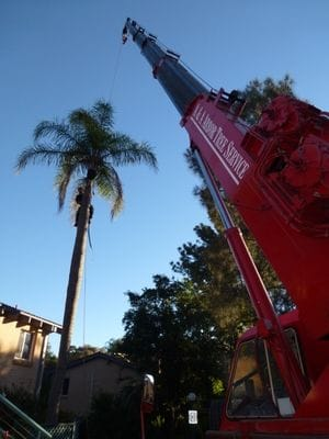 emergency work, crane work, land clearing