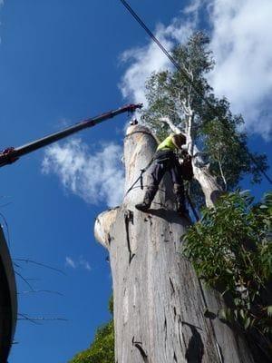 aborist, arbor, tree care