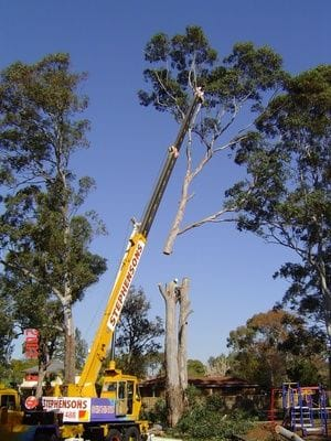 crane work, tree removal