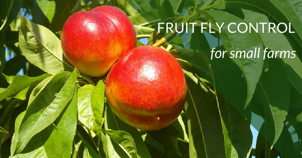 Fruit Fly Control for Small Farms