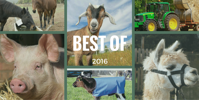 The top 10 articles on The Farm Co Blog in 2016