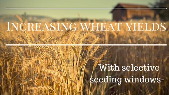 Increasing wheat yields with selective seeding windows