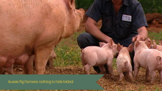 Aussie Pig Farmers: nothing to hide (video)