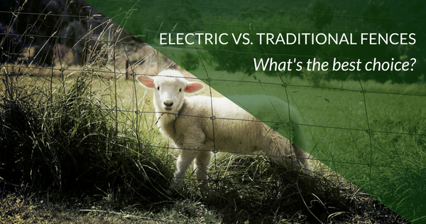 Electric Fence vs Traditional fence: what's the best choice for small farms?