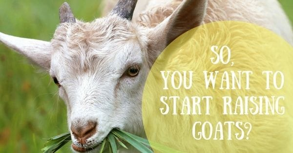So, you want to start raising goats?
