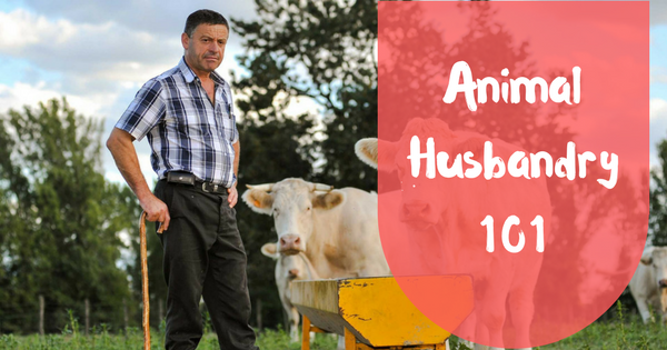Animal husbandry 101