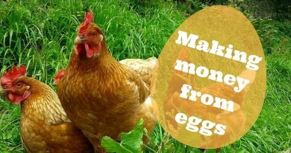 Making Money from Eggs