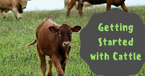 Getting Started with Cattle