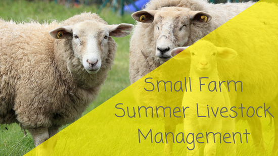 Small Farm Summer Livestock Management
