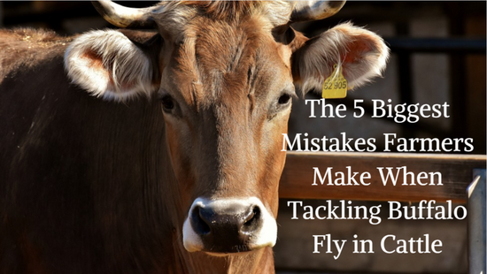 The 5 Biggest Mistakes Farmers Make When Tackling Buffalo Fly in Cattle