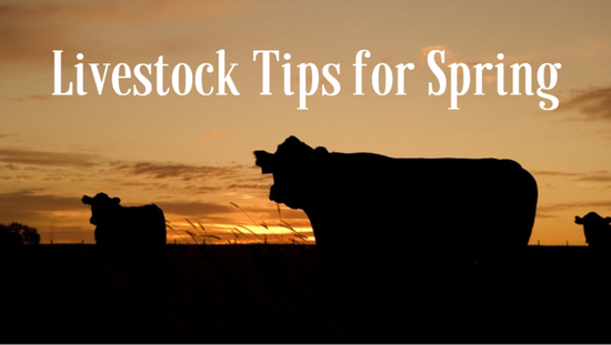 Livestock Tips for Spring