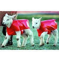 Bainbridge Lamb Blanket - Pk of 50