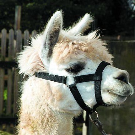Bainbridge Halter for Alpacas