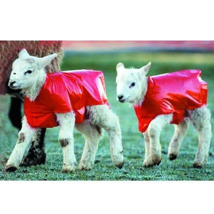 Bainbridge Lamb Blanket - Pk of 25