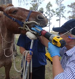 Equine Services | Knox Veterinary Services | Knox Vets Dalby QLD