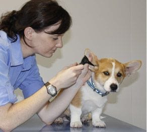 About Knox Vet Clinic | Knox Veterinary Dalby QLD