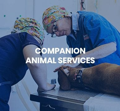 Companion Animal Services